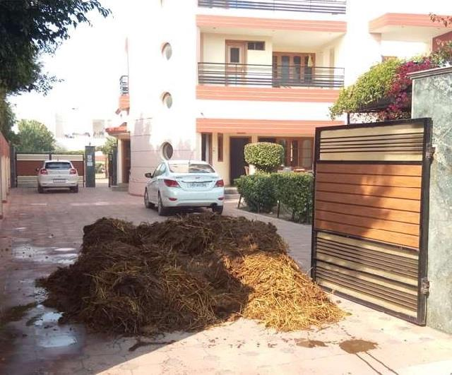 ultimatum to cancel cases filed against sood s house cow dung