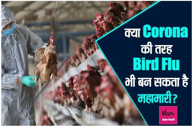 वैज्ञानिकों की चिंता: महामारी ना जाए बीमारी क्योंकि कोरोना की तरह Bird Flu भी बदलता है स्ट्रेन