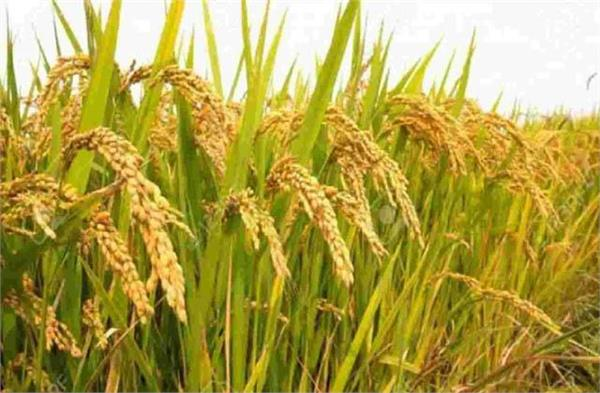 paddy procurement worth rs 1 10 lakh crore so far on msp