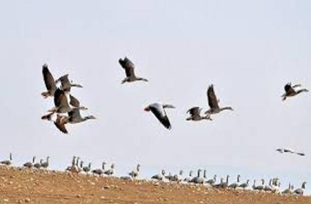 no bird died in dhametta range in 2 days
