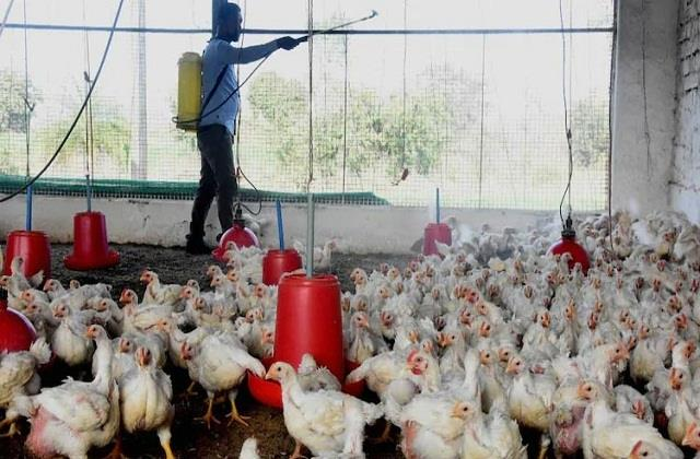 can bird flu take the form of epidemic among humans