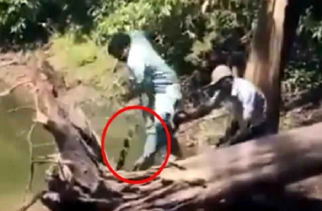 national news punjab kesari social media cobra video viral river