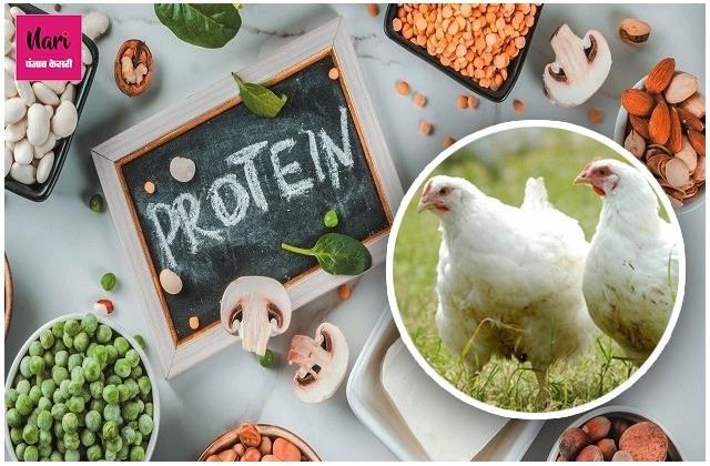 बर्ड फ्लू के कारण नहीं खा रहे चिकन तो ट्राई करें ये आहार, प्रोटीन की कमी होगी पूरी