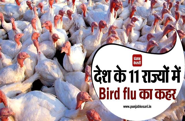 bird flu havoc in 11 states of the country