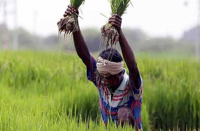government procures 564 lakh tonnes of paddy on msp