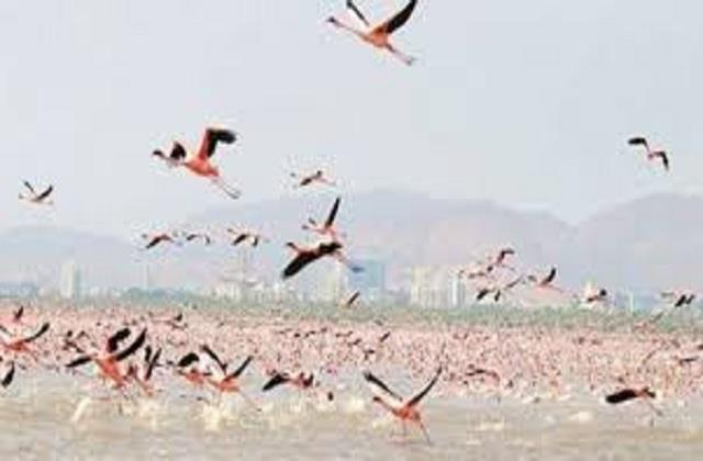 death toll of guest birds reached 4921