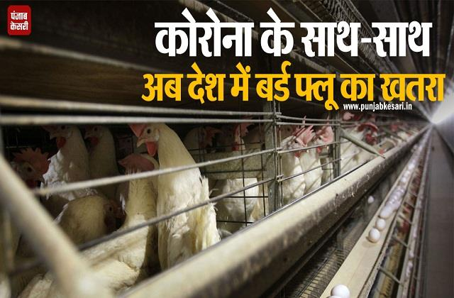 now the fear of bird flu in the country