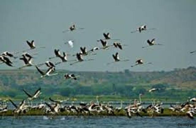 experts visited bird affected area 215 more birds found dead