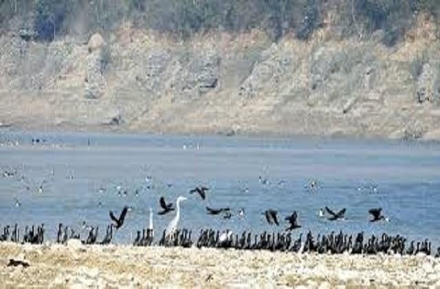 the process of death of migratory birds continues in pong lake