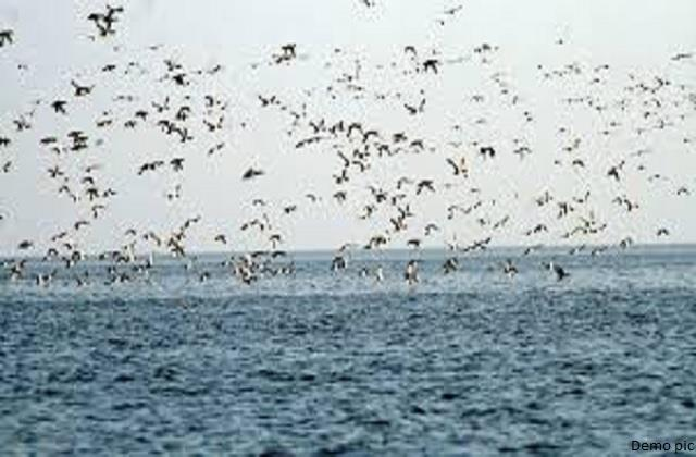 105 exotic birds and 16 crows found dead