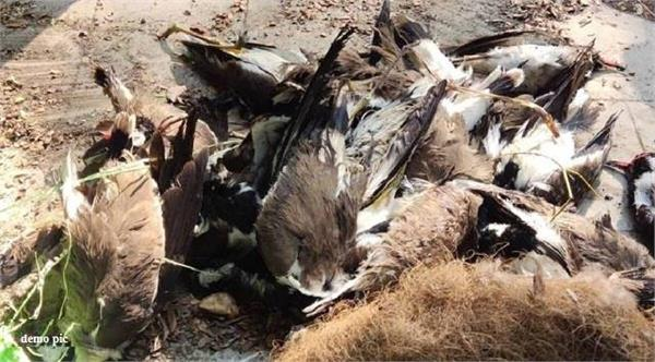 suspected death of birds in this district of punjab