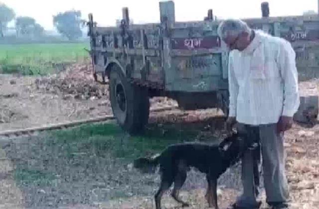 किसान ने बच्चों के नहीं पालतू कुत्ते के नाम कर दी सारी जायदाद, वजह जान आप भी कहेंगे 'वाह'