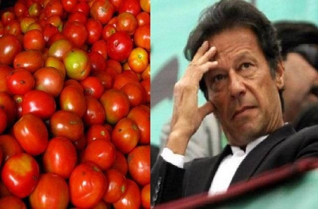 sindh farmers protest against imran government tomato imports