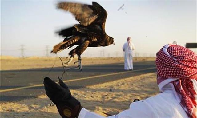 pakistan allowed to hunt rare houbara bustard to dubai royals