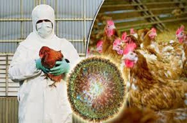 first case bird flu in punjab