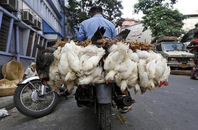 bird flu chicken price