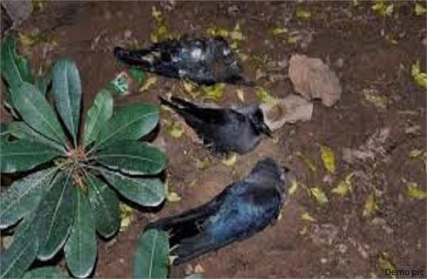 sample report of dead birds negative