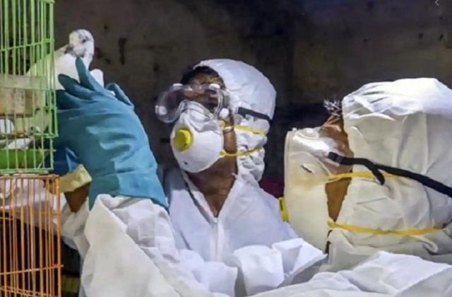 national news punjab kesari delhi zoo owl bird flu delhi government