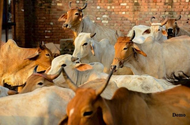 up 25 bovine animals being taken to bihar for slaughter recovered