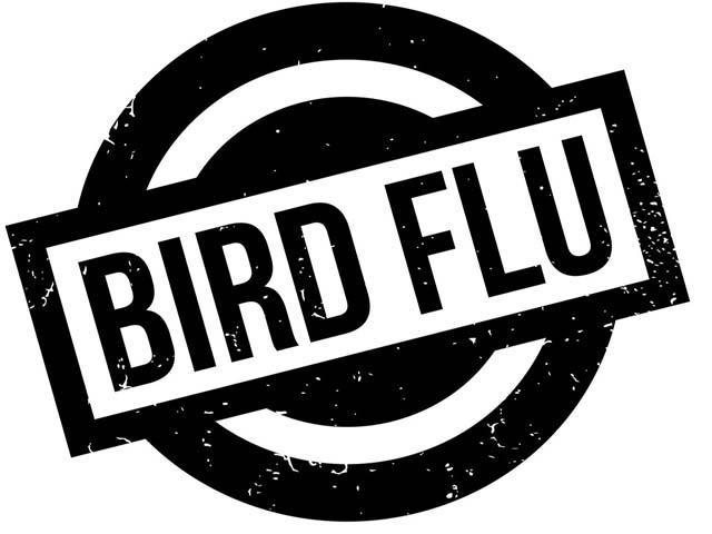 report from bhopal confirmation of bird flu