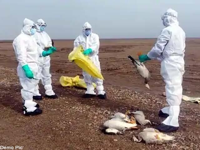 94 more guest birds died from bird flu