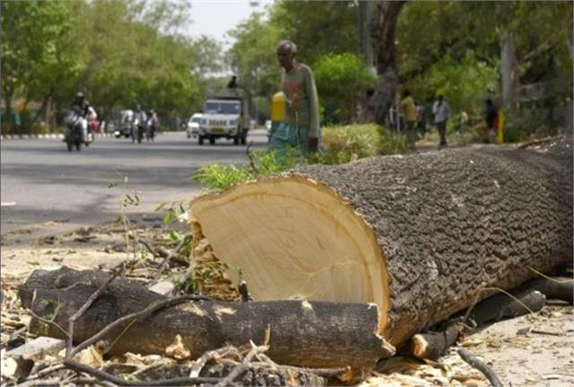 39 trees to be cut to widen the road