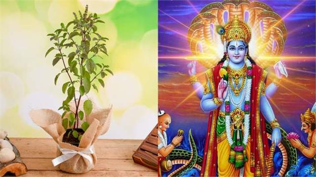 importance of tulsi in hinduism