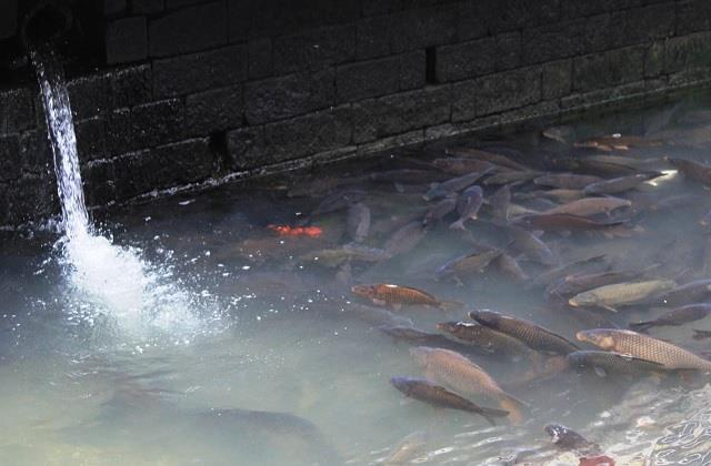 10 quintal fishes become death due to pollution