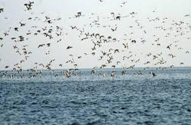 no foreign birds died in pong lake area for 2 days