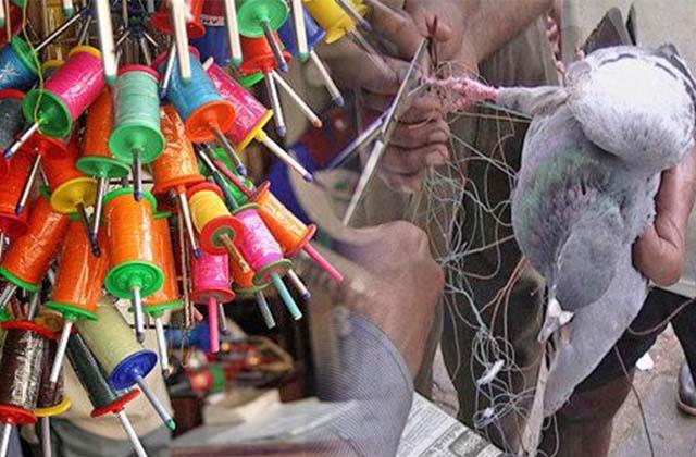 china dor selling secretly kites market before basant panchami