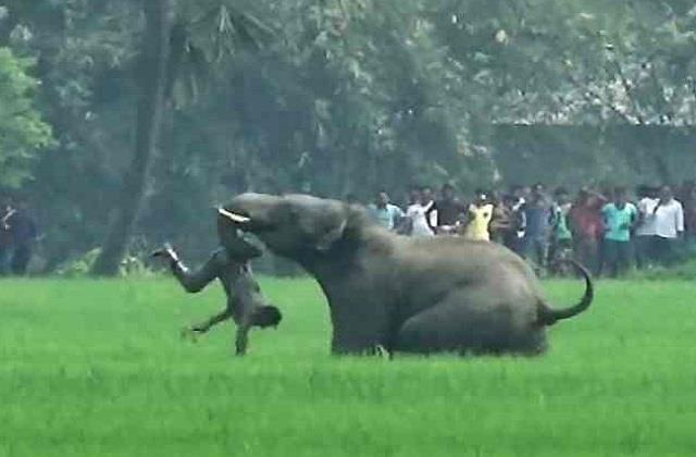 jungali elephant crushed father and his 2 sons in sidhi