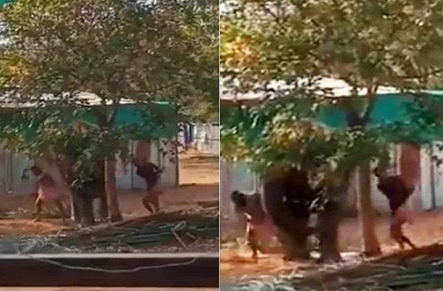 national news punjab kesari social media tamil nadu elephant video viral