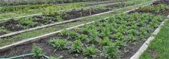 herbal farming will be started in jails on the lines of haryana