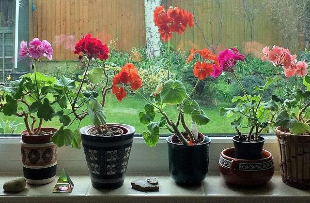 पॉजिटिव एनर्जी ही नहीं, आत्मविश्वास भी बढ़ाते हैं घर में लगे ये 7 पौधे