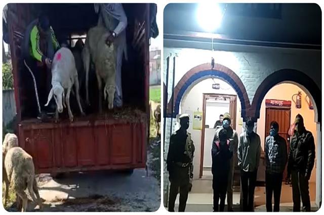 hostage to shepherds robbed 32 million animals