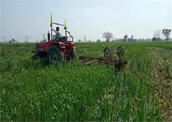 this farmer of punjab took a big step against agricultural laws