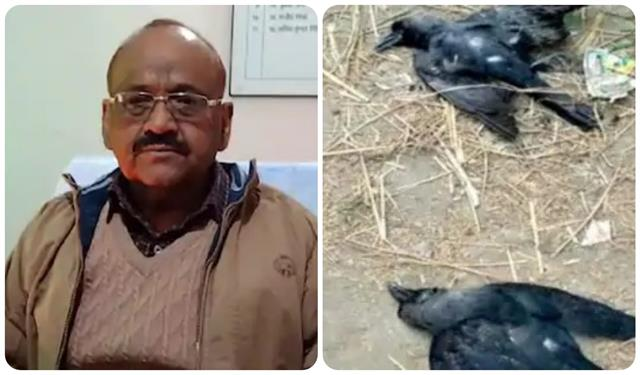 bird flu 2 crows and 1 owl found dead in kanpur forest officer
