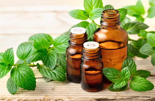 mentha oil rose for third consecutive day