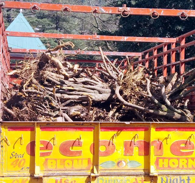 truck caught with full of roots of plants