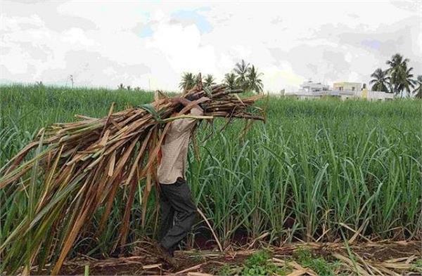 government dissolving  sweetness  among farmers highest price sugarcane haryana
