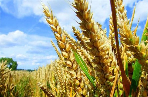 44 of rabi crops have been harvested government
