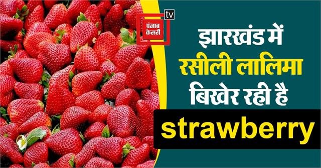 strawberry is spreading succulent redness in jharkhand