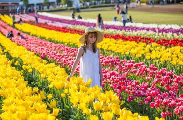 दो साल बाद खुला एशिया का सबसे बड़ा 'Tulip Garden', पीएम मोदी ने की यह अपील