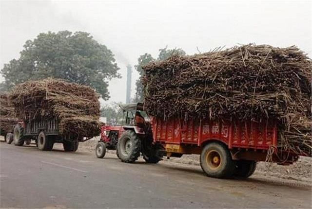 western up farmers have to wait long to get sugarcane weighed