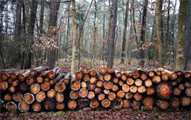 cut 554 trees
