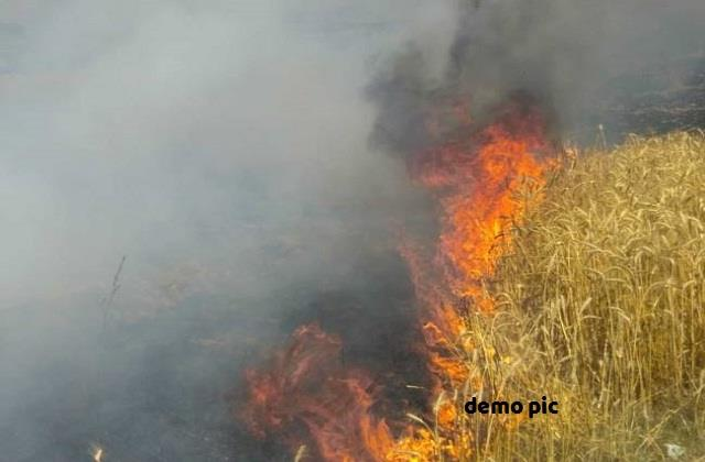 lightning spark caused by spark of electric wire in wheat crop