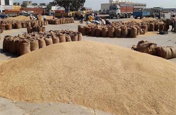 wheat raising problem fci invites labor from kurukshetra