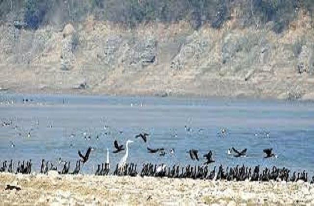 10 more birds found dead