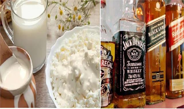 now eating curd of milk curd has reduced in haryana