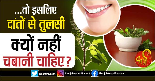 why basil leaves cant chew with teeth